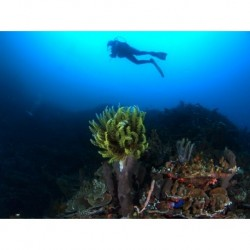 PADI Assistant Instructor &...